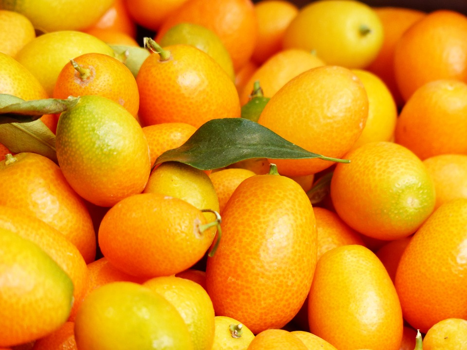 eco-citric-kumquat