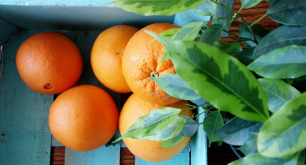 eco-citric-naranja-ecologica