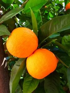 eco-citric-naranjas-ecologicas