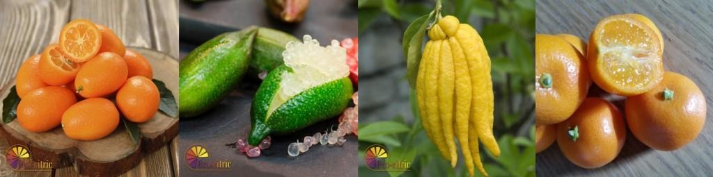 E-citric-citricos nuevos