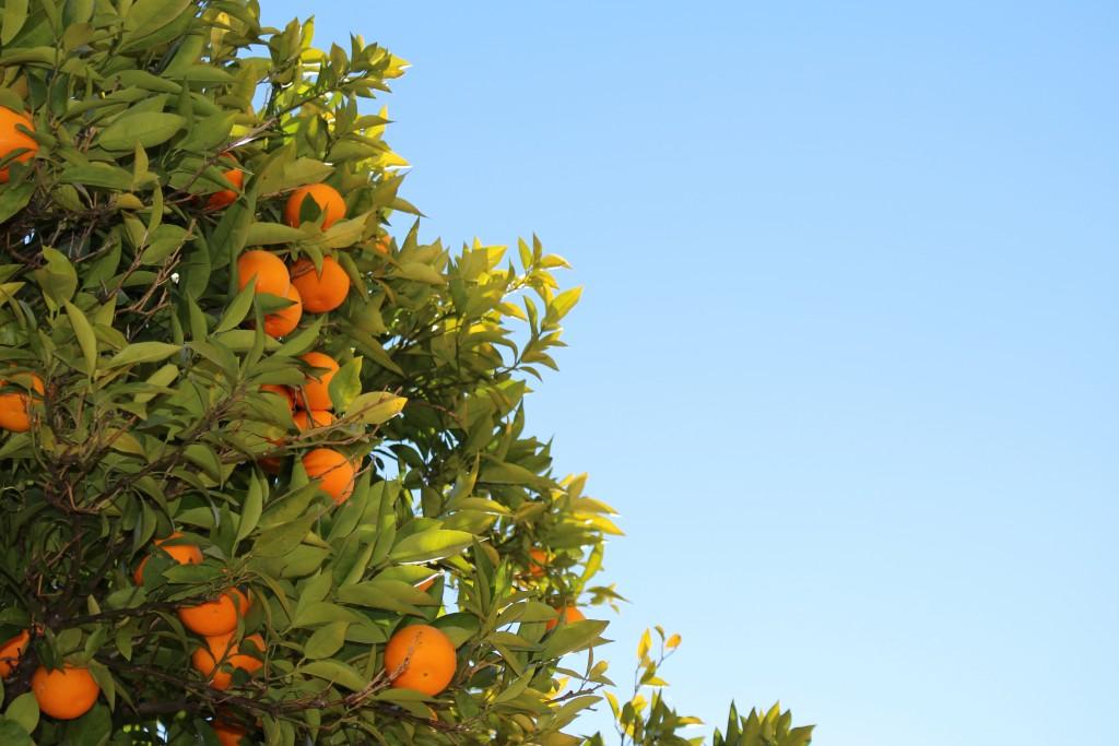 Eco citric-calidad-naranjas ecologicas